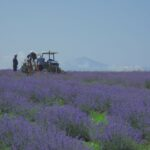 """Zero-waste, no pollution & """"green"""" power in production of essential oils in Serbia"""